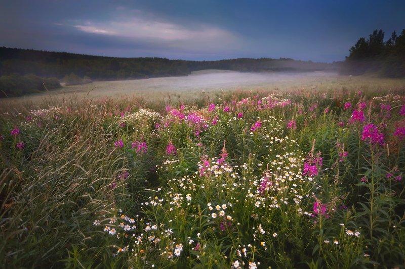 ленобласть, карельскийперешеек, пейзаж Июль. . .photo preview