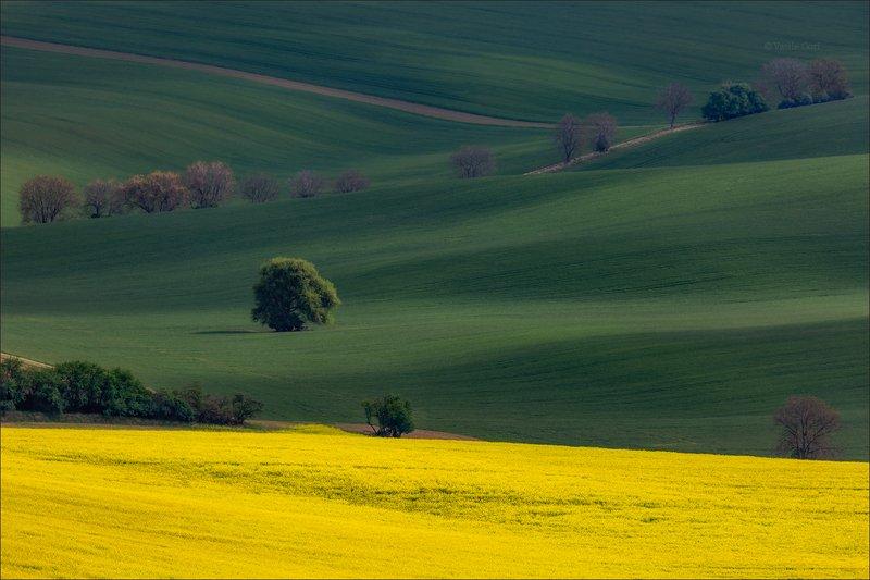 южная моравия,пейзаж,линии,south moravian,lines,свет,czech,весна,чехия,landscapes,поле,рапс \