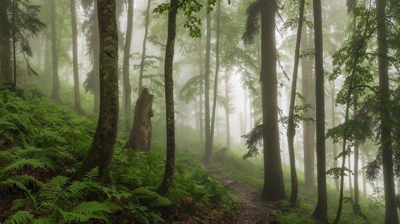 В эльфийском лесуphoto preview