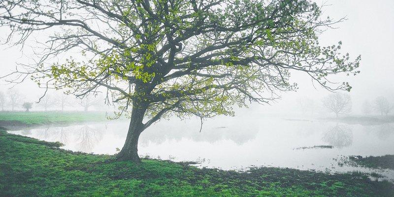 туман, озеро, дубы photo preview