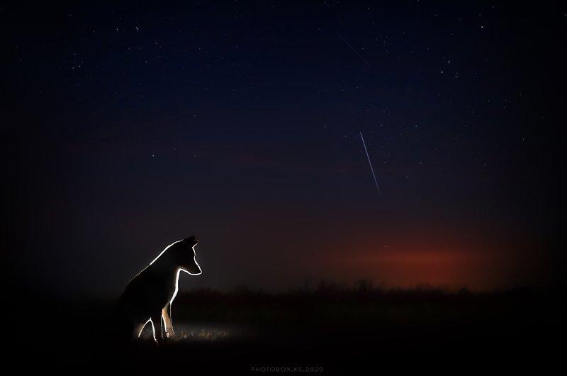 портрет, пейзаж, ночь, звезды, анималистика, черный фон, собака STARLIGHT NIGHT ✨photo preview