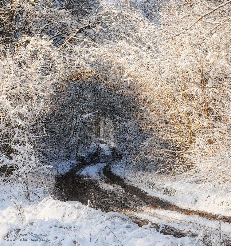 В лабиринтах зимыphoto preview