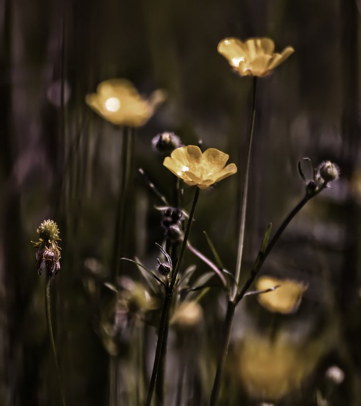 природа, макро, лето, цветы *photo preview
