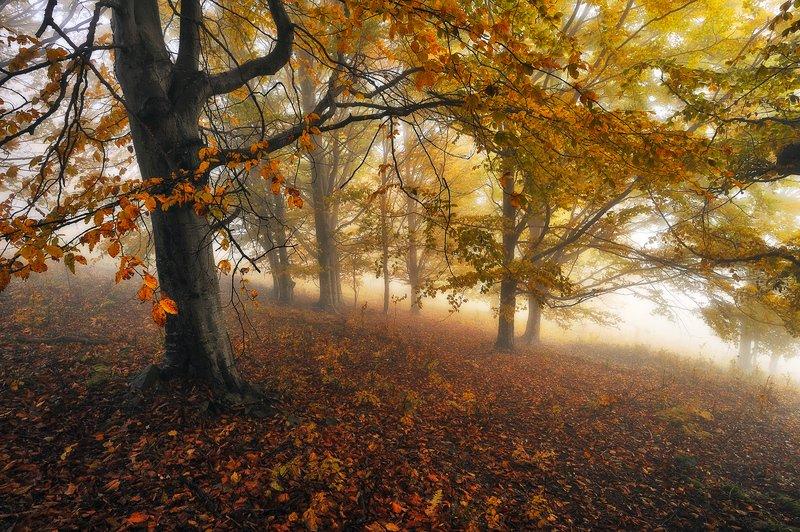 туманный осенний лесphoto preview
