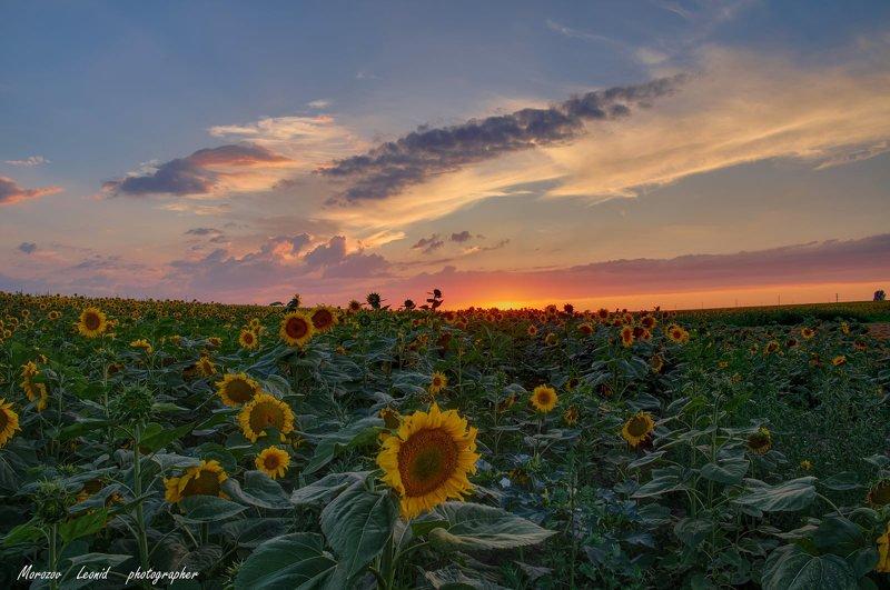 #nature, #туман, #лес, #oсень, #украина, #карпаты, #пейзаж, #закат, #туман, #солнце, #свет, #mountain range, #mountains, #туризм, #лес, #nature, #природа, ***photo preview
