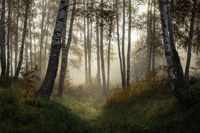 лес, деревья, туман, утро Туманный лесphoto preview