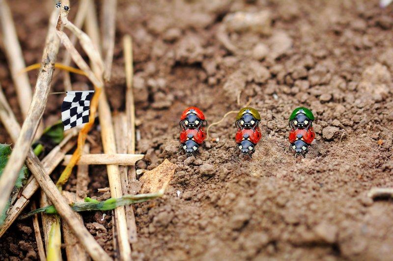креатив, обработка, концепция, насекомые, букашки, concept, fineart, ladybugs, insects, races На старт, внимание, марш!photo preview