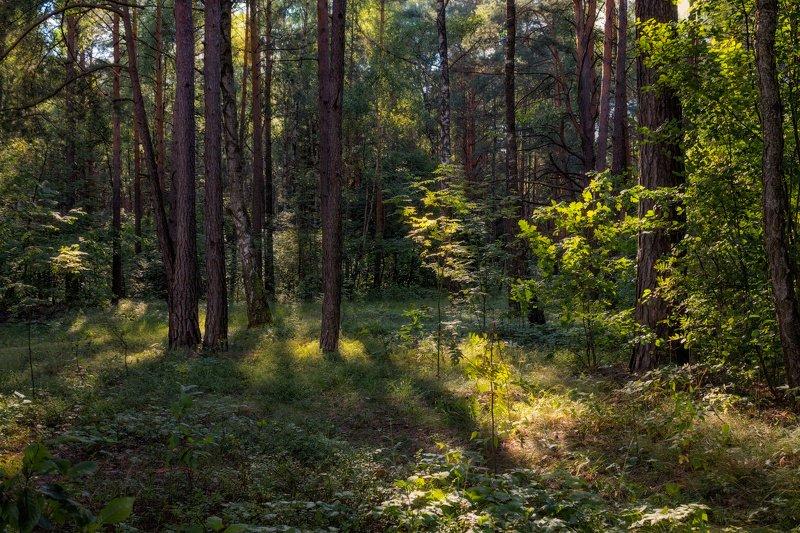лето, лес, В лесуphoto preview