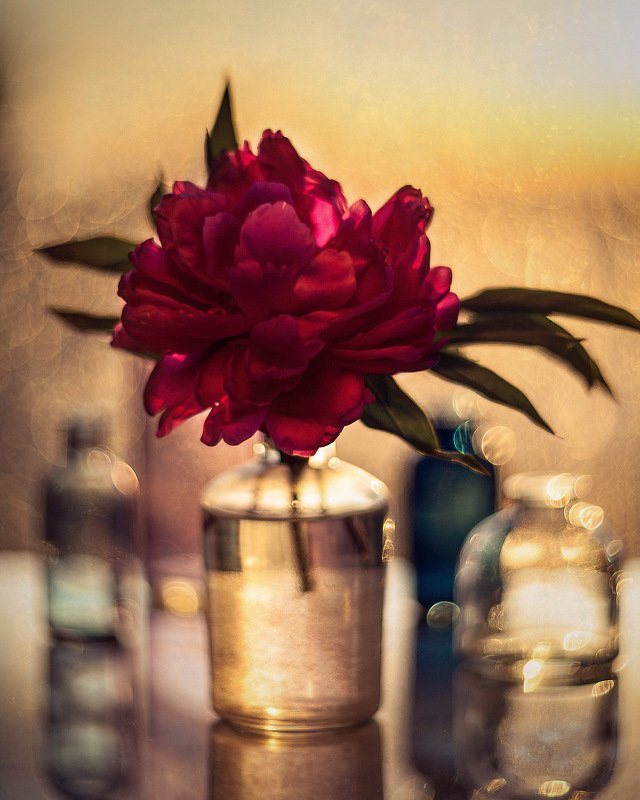 пион цветы закат боке натюрморт гелиос flowers bokeh stilllife helios manualfocus Пионphoto preview
