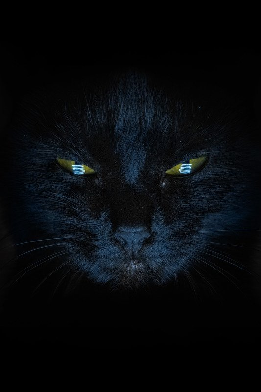 кошка, черный кот, взгляд взглядphoto preview