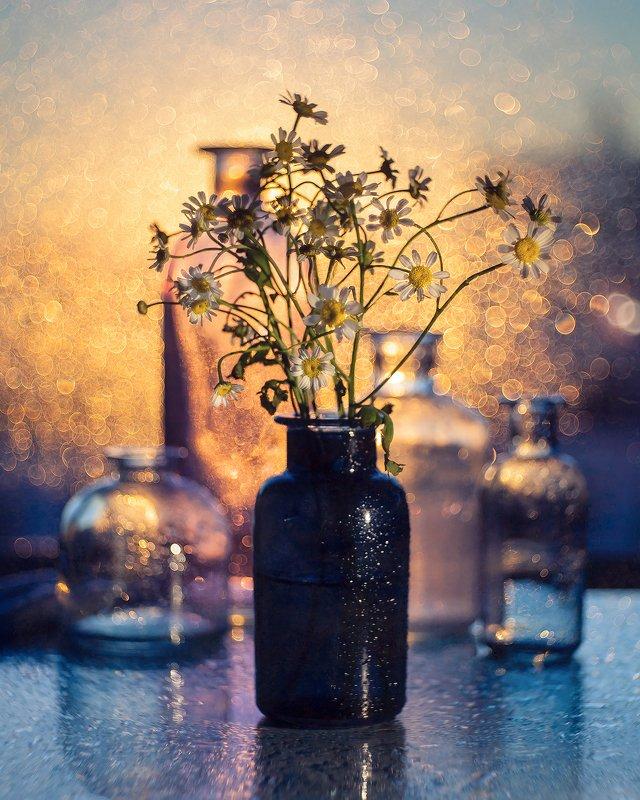 боке закат ромашки натюрморт триоплан bokeh stilllife На закатеphoto preview
