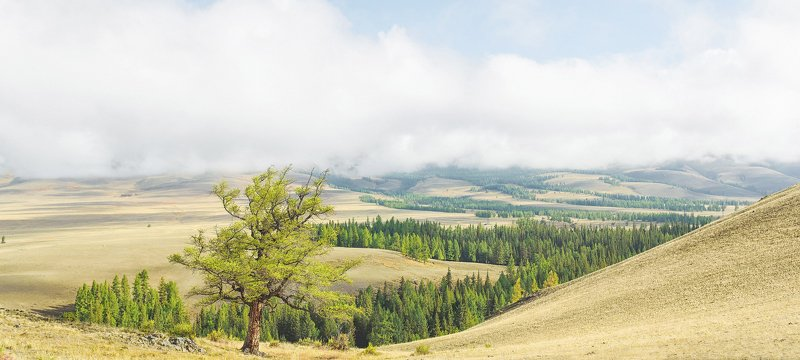 Алтайские горы, горный лес photo preview