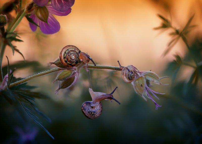 макро улитки природа вечер красота Приключения подружекphoto preview