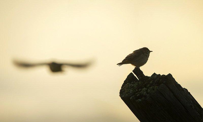 птица, славка Прощай...photo preview