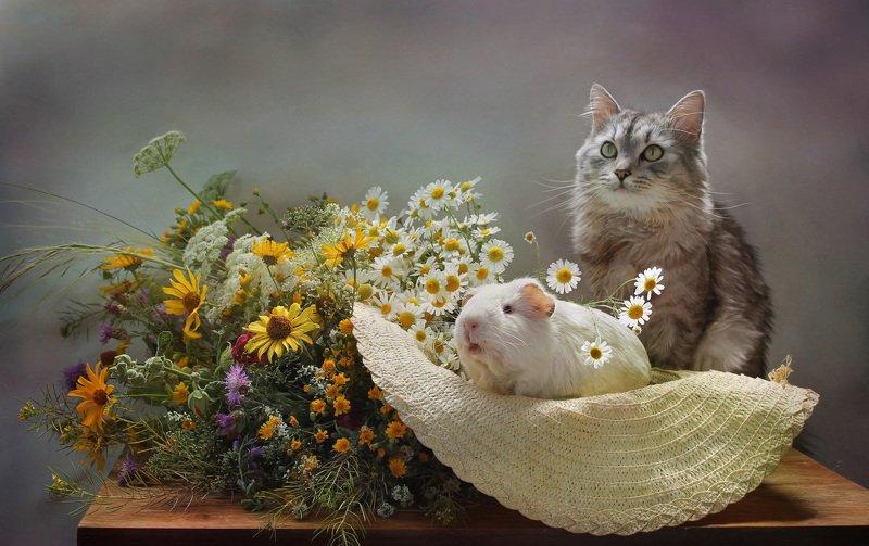 композиция, животные, кот, кошки, грызуны, морская свинка, лето, цветы Ах, лето!photo preview