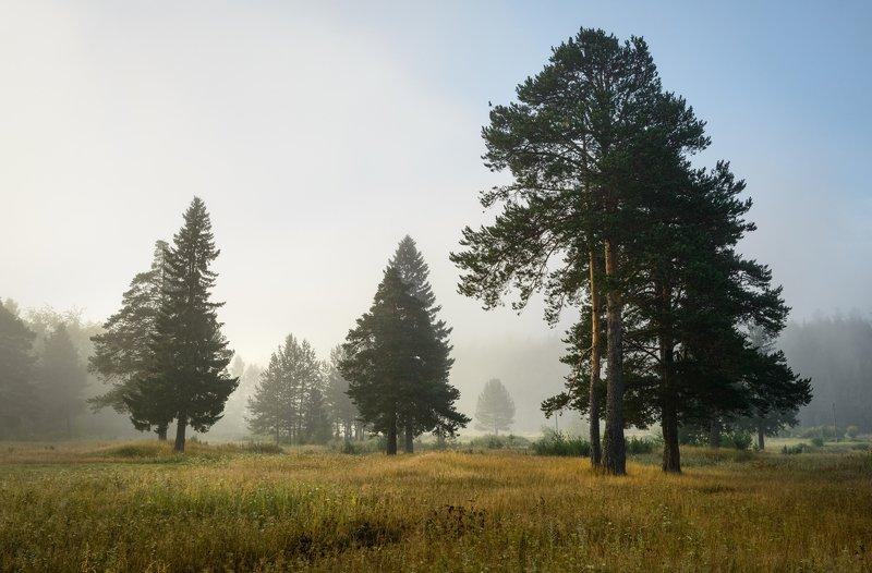 Утренний туман.photo preview