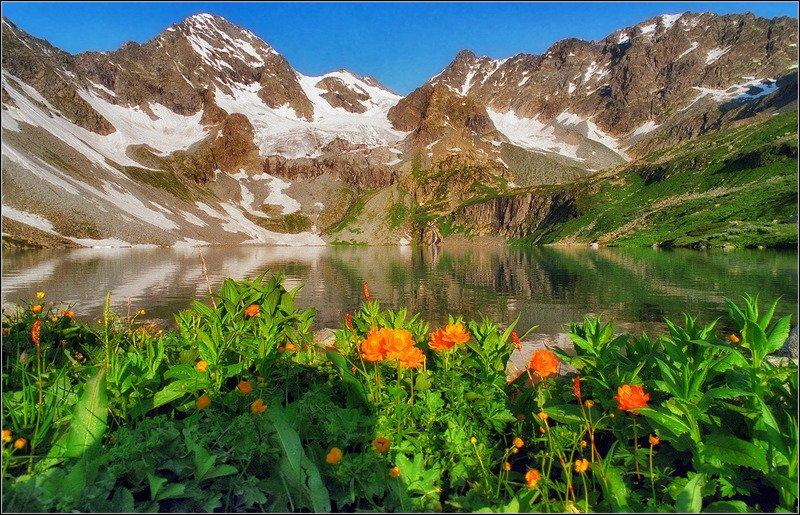 алтай, катунский хребёт, весна,  в.осиновское озеро, утро,  жарки, ледники *****photo preview