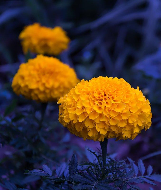 природа, лето, цветы, макро, Цветыphoto preview