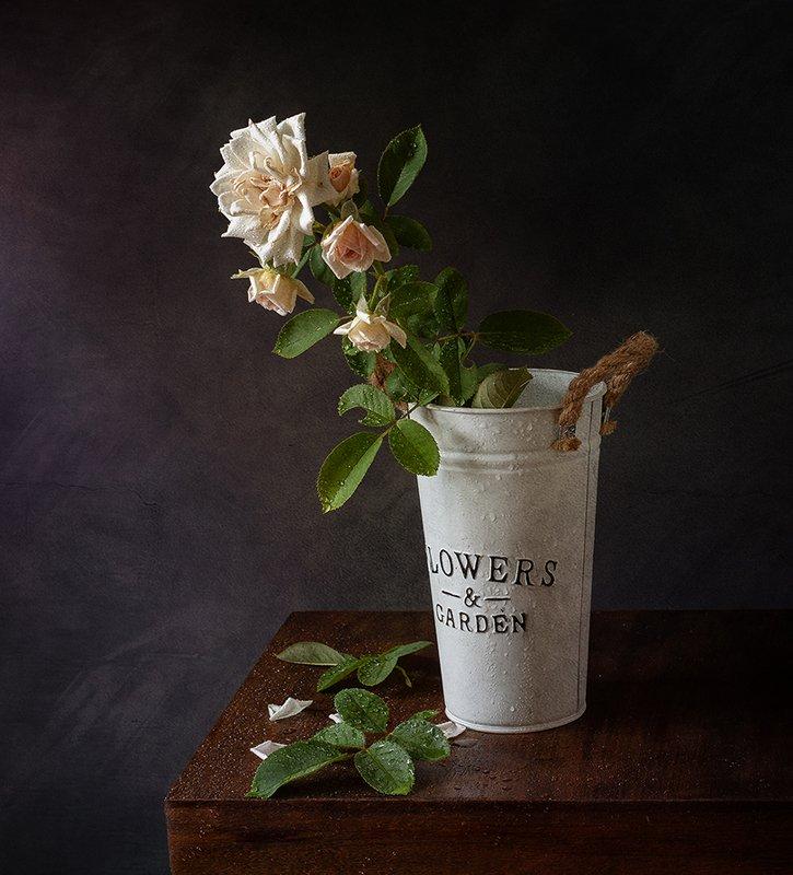 натюрморт, цветы Розаphoto preview