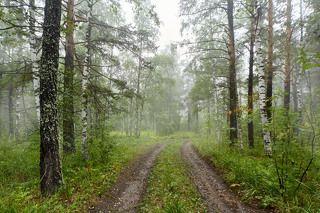 Дорога по лесу...