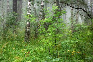Выхваченное настроение леса...