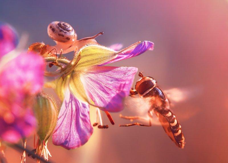 улитка муха журчалка макро цветы природа луг У каждого свои заботыphoto preview