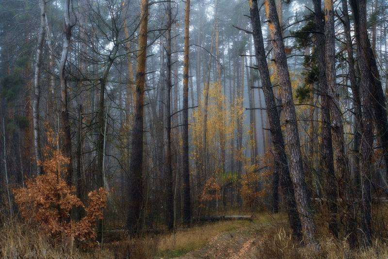 утро,осень,туман,лес Утренний лес в туманеphoto preview