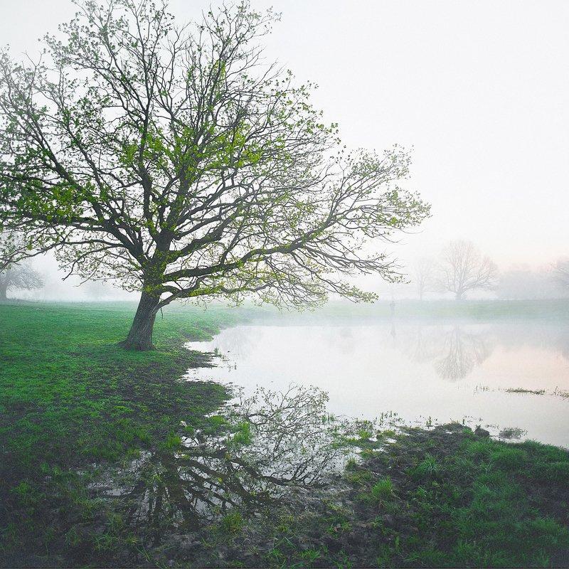 рассвет на озере, одинокий дуб, туманное утро photo preview