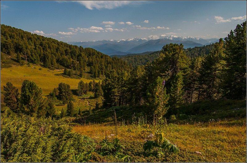 алтай, теректинский хр., тайга, кедры, вечер, г. белуха Лето в Алтайских горахphoto preview