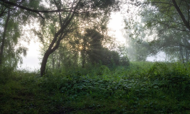лето, туман, утро, Утро тумановphoto preview