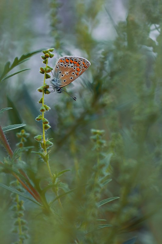 бабочка,крылья,свет,трава,блик,природа ***photo preview