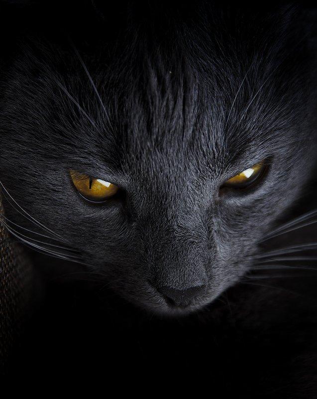 В каждом коте живет маленький демон. Ну это как свет поставить photo preview
