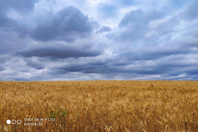 Что-то небо хмурится...видно будет дождьphoto preview