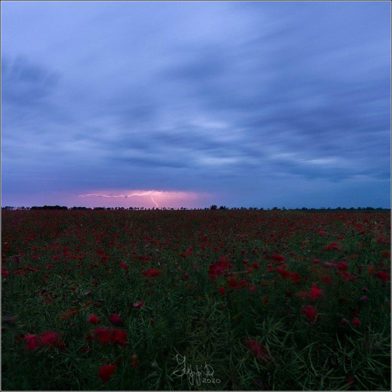 молния, гроза, маковое поле Гроза над маковым полемphoto preview
