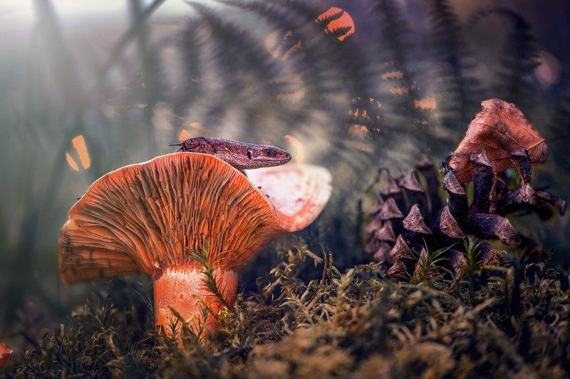 ящерица, макро, лес, гриб, мох, боке, природа Любопытствоphoto preview