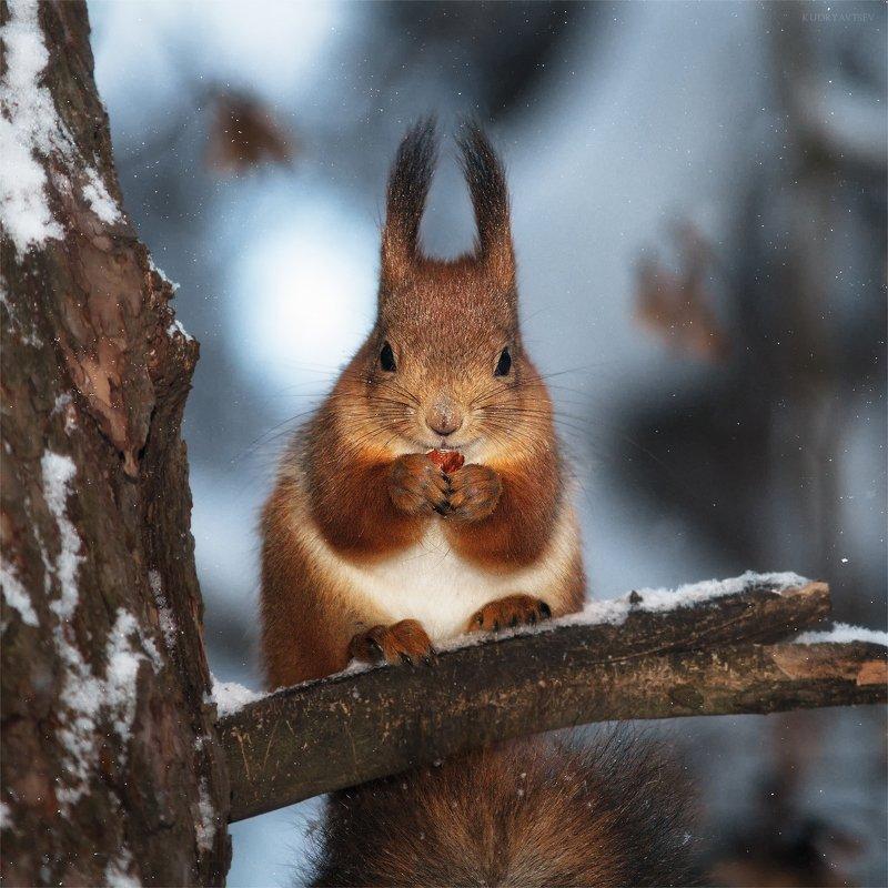 Белка песенки поёт,да орешки всё грызётphoto preview