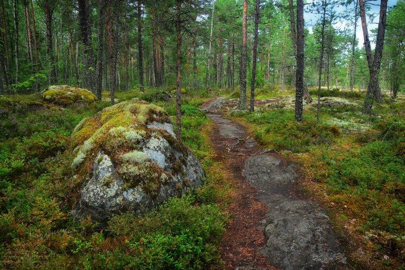 ленинградская область, ладога, лес, лесная тропа Лесной тропой вдоль озераphoto preview