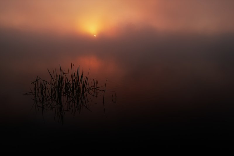morning, fog, sky, sunrise Morning fogphoto preview