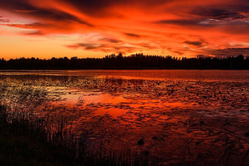 закат, озеро, псков Невероятный вечер на лесном озереphoto preview