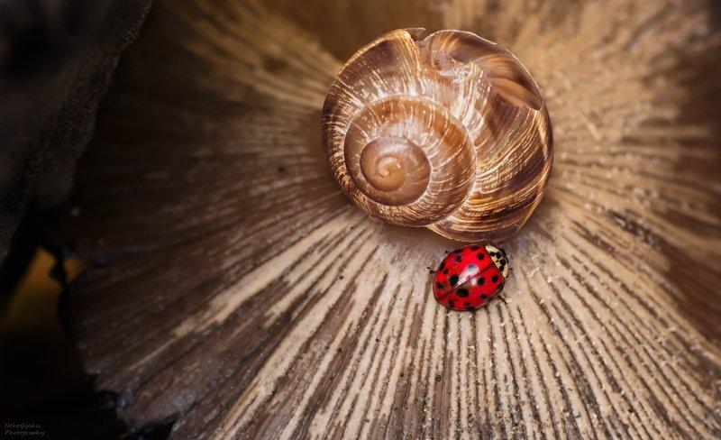 макро, природа, ракушка, гриб, насекомые, божья коровка, macro, nature, shell, mushroom, insects, ladybug, В поисках ночлегаphoto preview