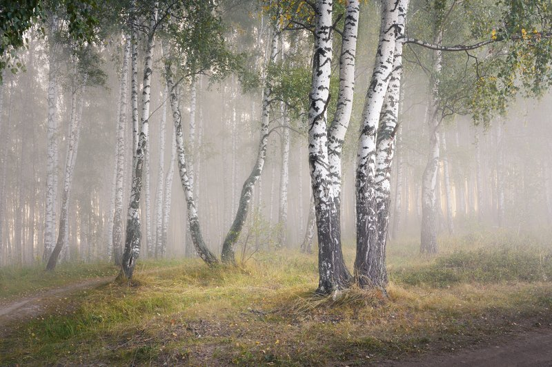 лес, осень, туман, деревья Приближение осениphoto preview