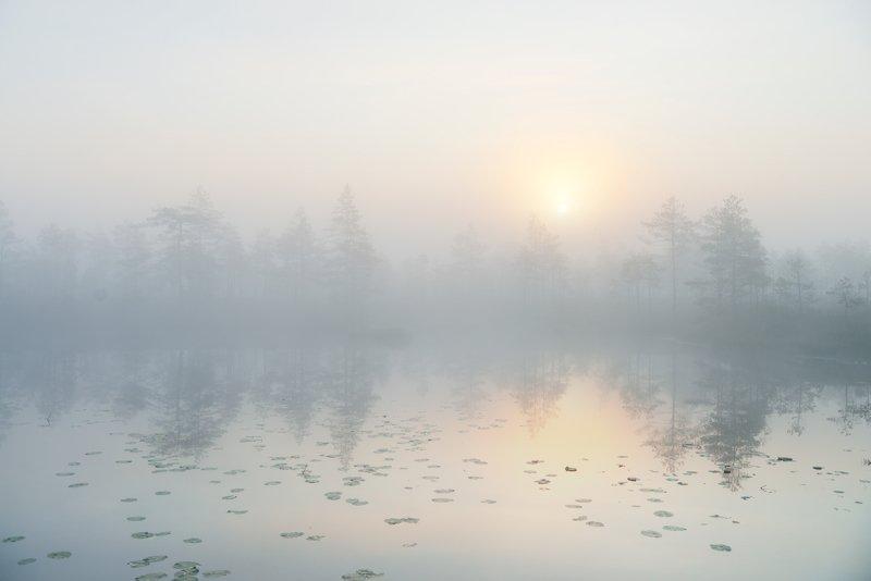 живописные болота Ленинградской области...photo preview