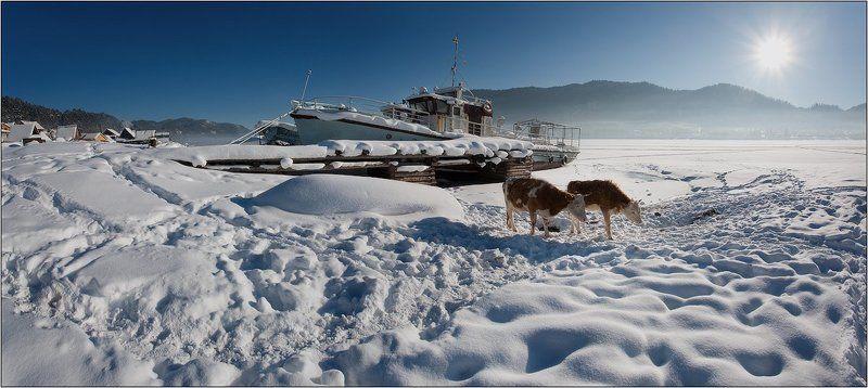 алтай, артыбаш зима... что делать нам в деревне...photo preview