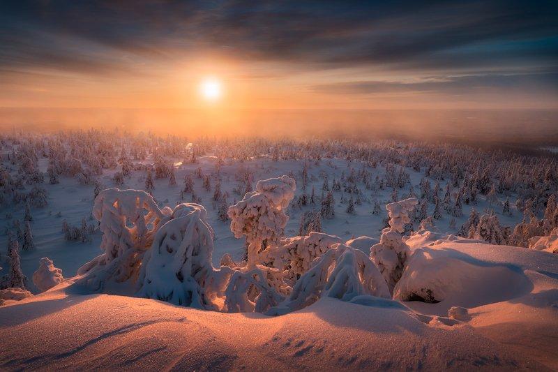 снег, ёлки, деревья, зима, солнце, небо Зима близкоphoto preview