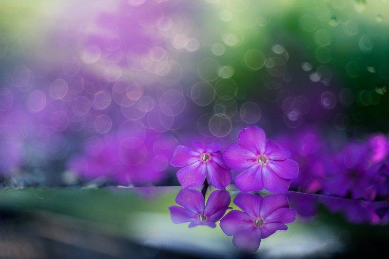 цветы Вечерняя феерия...photo preview