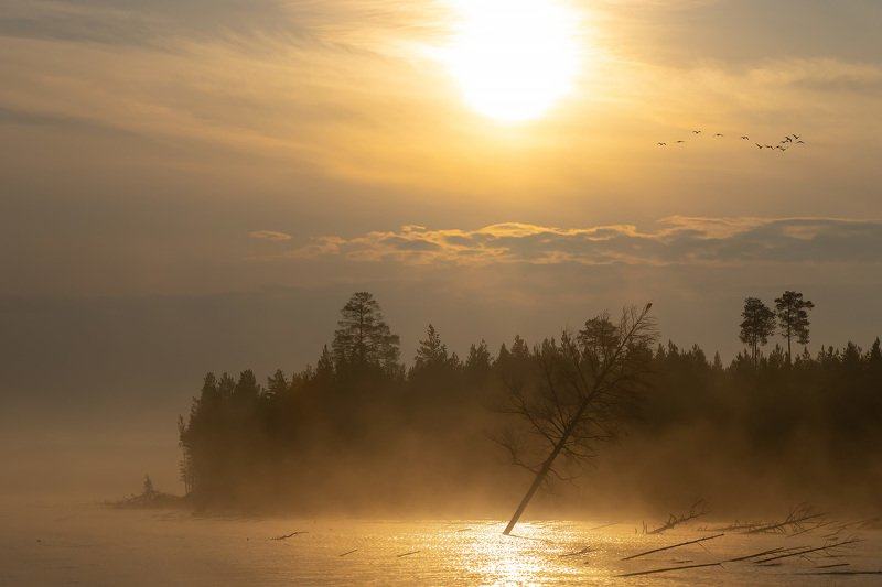 богучаны, утро, вода, озеро, туман, облака, солнце, лес Утро на Богучанахphoto preview