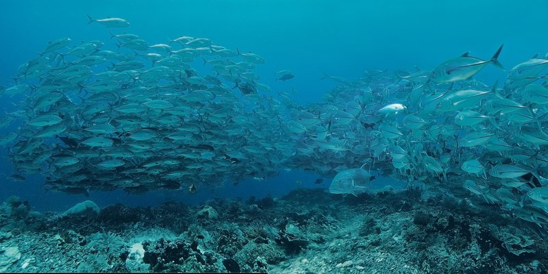 дайвинг, рыба, индонезия, стая, океан Коранксыphoto preview