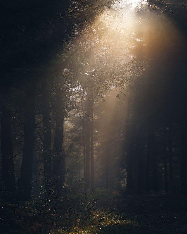 осень, лес, природа, урал, златоуст, туман Луч света в тёмном царствеphoto preview