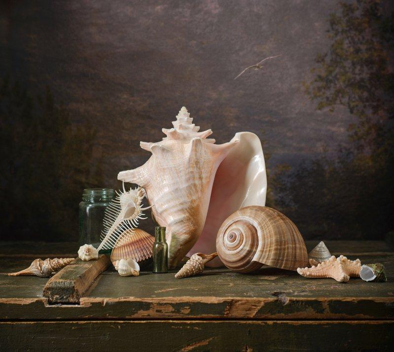 море, ракушки, раковина Мечты о мореphoto preview