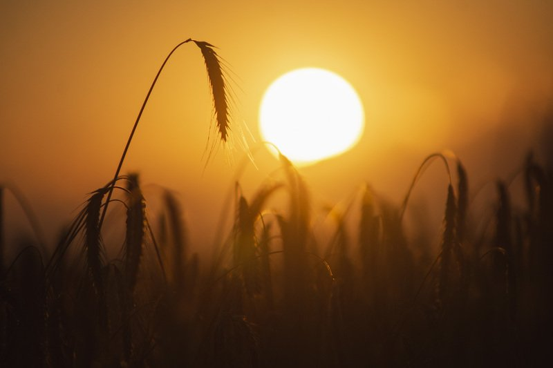 природа, пейзаж, закат, поле, солнце * * *photo preview